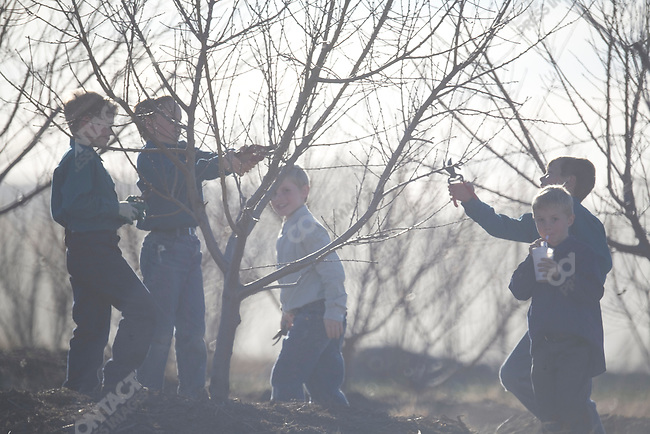 "Fundamentalist Mormon group F.L.D.S.,  orchard pruning on the ""Yearning for Zion"" compound in Eldorado, Texas, USA, February 11, 2009"