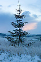 08/12/14<br /> <br /> A festive looking pine tree near Sparrowpit.<br /> <br /> After overnight snowfall in Debyshire dawn reveals stunning snowscapes across the Peak District.<br /> <br /> ***ANY UK EDITORIAL PRINT USE WILL ATTRACT A MINIMUM FEE OF &pound;130. THIS IS STRICTLY A MINIMUM. USUAL SPACE-RATES WILL APPLY TO IMAGES THAT WOULD NORMALLY ATTRACT A HIGHER FEE . PRICE FOR WEB USE WILL BE NEGOTIATED SEPARATELY***<br /> <br /> <br /> All Rights Reserved - F Stop Press. www.fstoppress.com. Tel: +44 (0)1335 300098