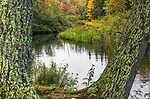 A touch of fall color visible from the shoreline of a tributary in the Chequamegon National Forest.