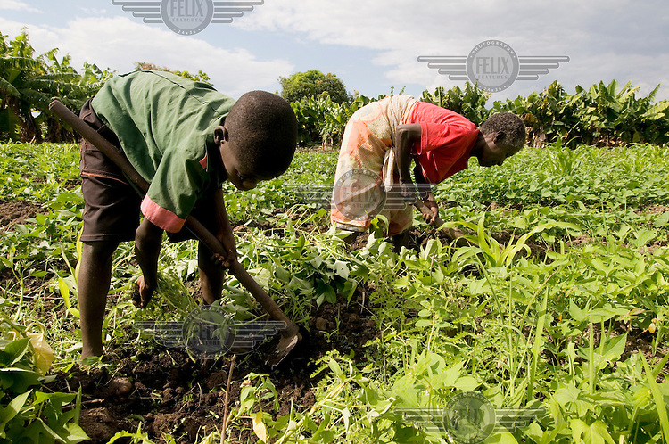 Fatch (left) and his grandmother Silika Mikithayo pick weeds out of a sweet potato vegetable patch.