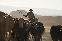 A cowboy moved his herd through the desert landscape near Hanksville, Utah, and Capitol Reef National Park.