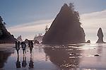 Olympic National Park, Coast Hikers, West Coast Trail, Shi Shi beach, the Olympic Peninsula, Washington State, Pacific Northwest, USA.