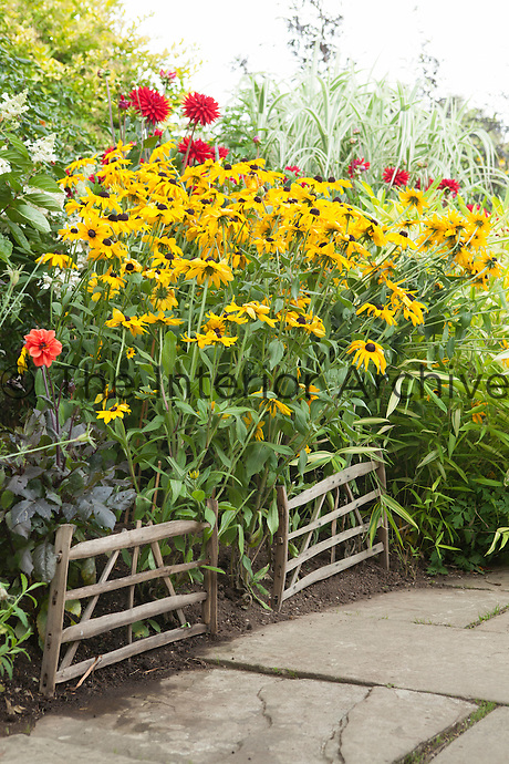 Summer border at Great Dixter with Black-eyed Susan (rudbeckia) and dahlias