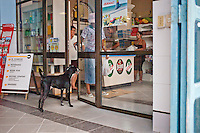 Cuba, negozio di stato, supermercato alimentare, cane davanti alla porta di ingresso<br />
