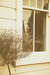 View into house window from street with small bush