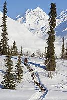 Rick Swensons team mushes down embankment to Puntilla Lake outside Rainy Pass Chkpt 2006 Iditarod AK
