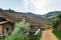 On top of the hill the Chapelle vineyard, in the foreground Les Bessards. The Hermitage vineyards on the hill behind the city Tain-l'Hermitage, on the steep sloping hill, stone terraced. Sometimes spelled Ermitage. a small tool shed and a tree in bloom. Tain l'Hermitage, Drome, Drôme, France, Europe