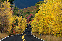 Vibrant autumn colors line this country road in the Wasatch Mountains.  September 2012.