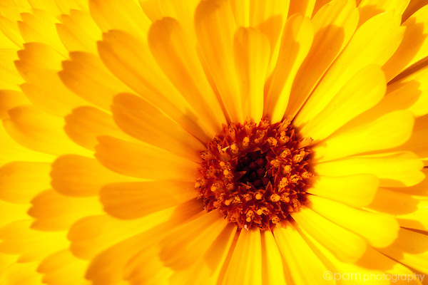 close up of the inside of a yellow flower