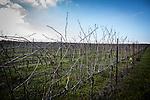 Sakorya Winery Golan Hights