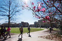 Flowers are in bloom and the sun is shining as Mississippi State students resume classes following a weeklong spring break.<br />