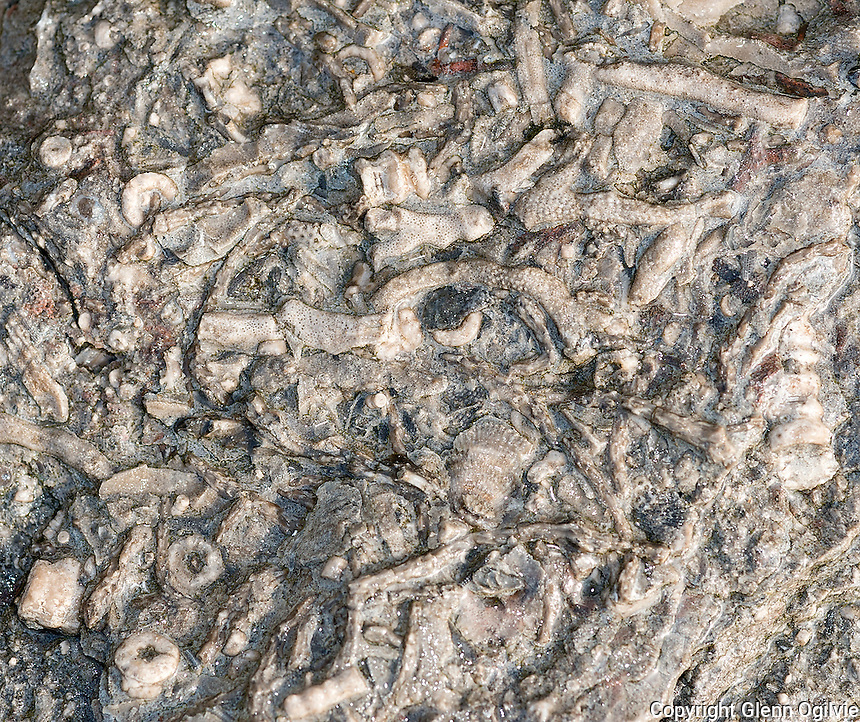 Armour stone, lining the banks of the St. Clair River at the Blue Water Bridge, are saturated with ancient fossils.