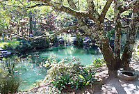 Stock photo: Tree near small pond in garden.