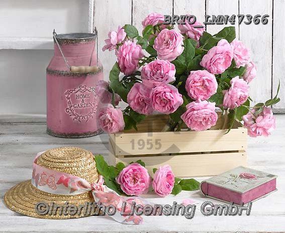 Alfredo, FLOWERS, BLUMEN, FLORES, photos+++++,BRTOLMN47366,#f#, EVERYDAY