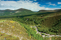 Looking to Meall a Bhuachaille from Glenmore National Nature Reserve, Cairngorm National Park, Badenoch & Speyside