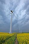 Wind turbines in field of canola near Magrath, Alberta, Canada