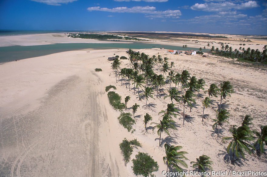 Aerial view of palm trees in sand dunes, Ceara State shore near Fortaleza, tropical beach, Brazil.