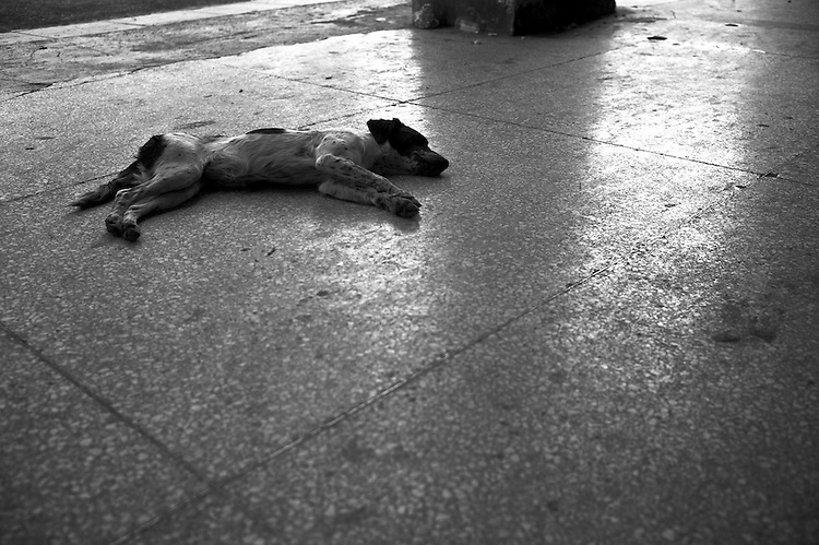 Images from the old Havana, Cuba. ..What you see it's pretty much way of life for dogs in Havana.  Who can blame them?  It's so hot that they spent most of the time laying down, colloing off in the shade and waiting for the cooler time of day to show up.
