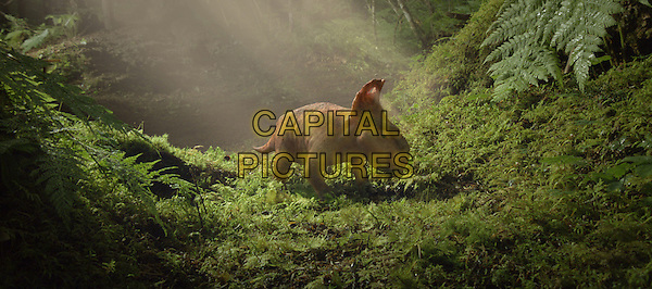 Patchi leaves the nest to explore his surroundings<br /> in Walking With Dinosaurs (2014)<br /> *Filmstill - Editorial Use Only*<br /> CAP/FB<br /> Image supplied by Capital Pictures