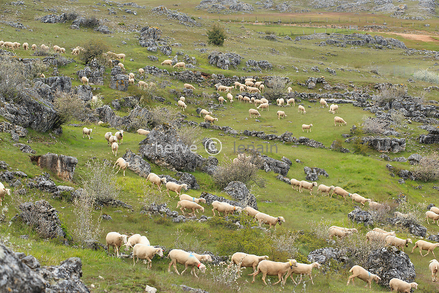 France, Lozère (48), causse Méjean, parc national des Cévennes, entre Florac et Meyrueis, chaos de Nîmes-le-Vieux et moutons // France, Lozere, Causse Mejean, Cevennes National Park, between Florac and Meyrueis chaos Nimes le Vieux and sheep