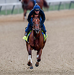 LOUISVILLE, KENTUCKY - APRIL 30: Plus Que Parfait, trained by Brendan Walsh, exercises in preparation for the Kentucky Derby at Churchill Downs in Louisville, Kentucky on April 30, 2019. John Voorhees/Eclipse Sportswire/CSM