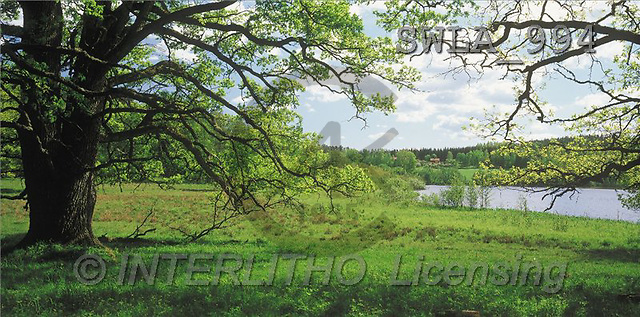 Carl, LANDSCAPES, panoramic, photos, tree, river(SWLA994,#L#)