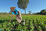 Salome Engura works in a community vegetable garden in Kayeleka Banda, Malawi, supported by the Maternal, Newborn and Child Health program of the Livingstonia Synod of the Church of Central Africa Presbyterian.
