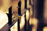Photograph of a golden key with yellow gemstone over a metal fence.