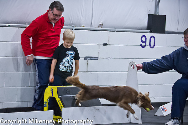 2 fast Fur U Flyball Practice held at Boomtowne Canine Campus Nov 21, 2014