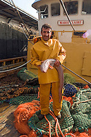 Deep sea trawler fisherman holding a conger eel spends eight days at sea after which he returns to dock to unload the catch.©shoutpictures.com..john@shoutpictures.com