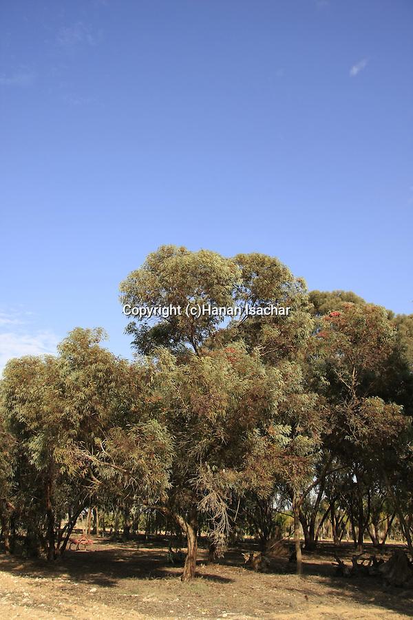 Israel, Northern Negev. Gilat Acclimation garden