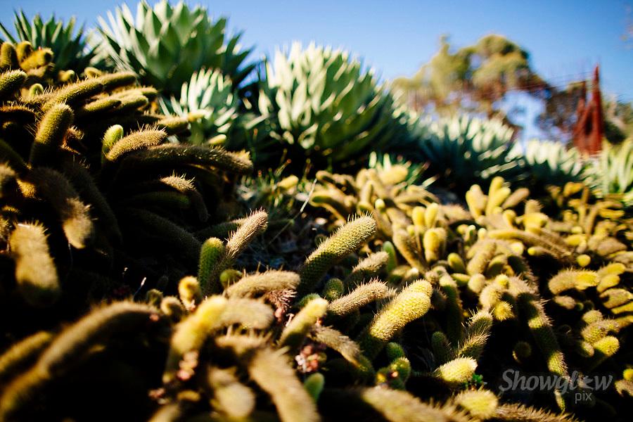 Image Ref: M300<br /> Location: Royal Botanical Gardens, Melbourne<br /> Date: 10.06.17