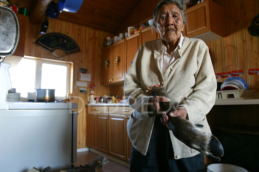 Vuntut Gwitchin First Nation elder, Edith Josie, holds the leg of a caribou in her kitchen in the aboriginal community of Old Crow, Yukon Territory, Canada. The bone marrow from the leg bone is eaten raw and the fur is used to make clothing.