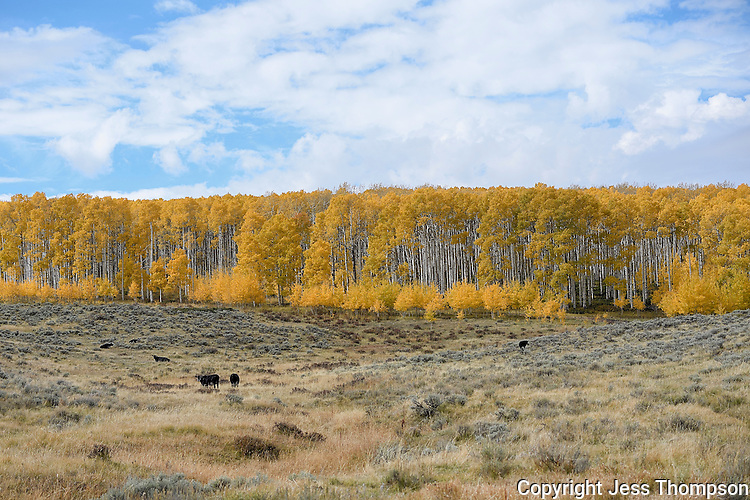 Fall Color, near Vernal, Utah