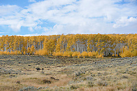 Fall Color, near Vernal, Utah
