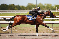 #162Fasig-Tipton Florida Sale,Under Tack Show. Palm Meadows Florida 03-23-2012 Arron Haggart/Eclipse Sportswire.