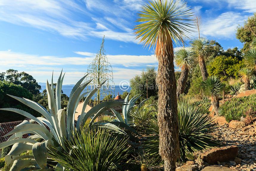 Domaine du Rayol en novembre : le jardin d'Amérique aride, avec cactées, agaves, Dasylirion et Yucca rostrata