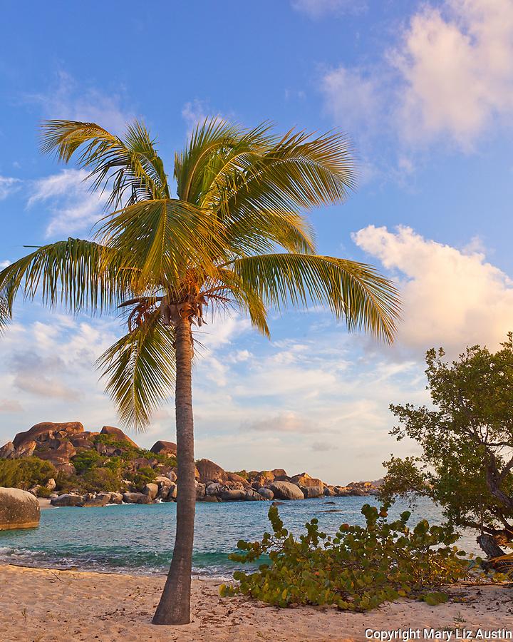 Virgin Gorda, British Virgin Islands, Caribbean <br /> A palm tree on the beach on Spring Bay at sunset, Spring Bay National Park