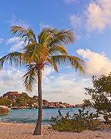 Virgin Gorda, British Virgin Islands, Caribbean <br /> A palm tree on the beach on Spring Bay at sunset, Spring Bay National Park