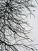 bare branches in fall<br /> <br /> ramas peladas en oto&ntilde;o<br /> <br /> kahle &Auml;ste im Herbst<br /> <br /> 2272 x 1704 px<br /> 150 dpi: 38,47 x 28,85 cm<br /> 300 dpi: 19,24 x 14,43 cm