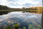 Small Lake in late evening light, Kuhmo, Finland, Lentiira, Vartius near Russian Border