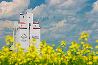 Grain elevator and canola flowers. Culross, manitoba