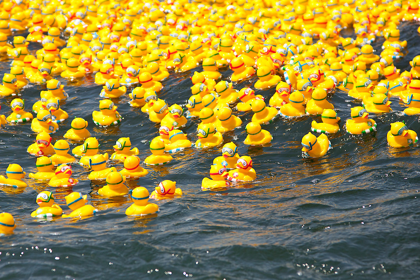 Some of the fifteen thousand rubber ducks that are emptied in to the Sakawa River during the Ashigara River festival, Kintaro duck-race in Matsuda, Kanagawa, Japan April 25th 2010