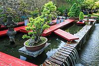 France, Gard, Générargues, LA BAMBOUSERAIE : les bonsaï du jardin d'inspiration japonaise.