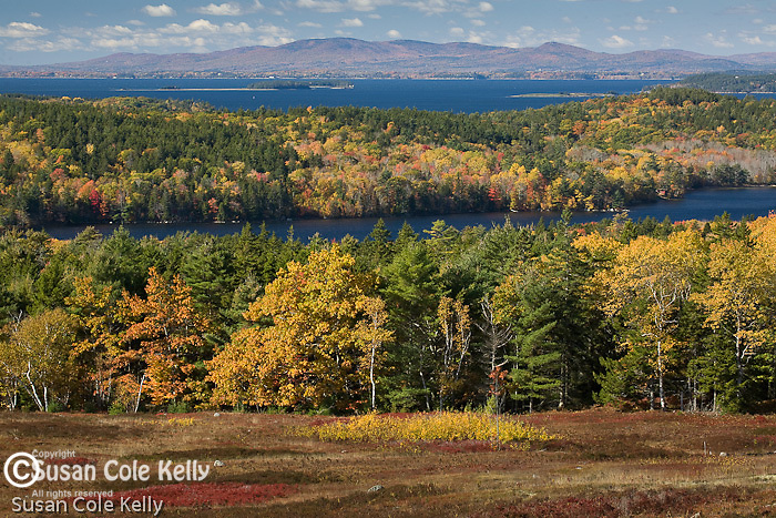 Autumn color over the Cooper Farm Preserve blueberry fields on the Blue Hill Peninsula, Sedgewick, Midcoast ME