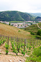 vineyard hermitage rhone france