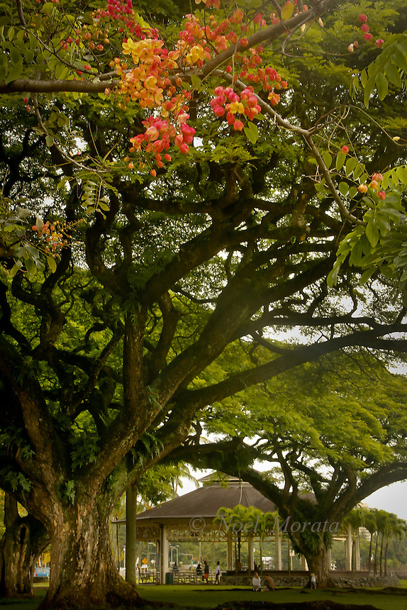 Scenic locations around Hawaii Island, farmers markets, ocean beaches and coastlines, waterfalls, forested areas, downtown hilo and kona, landmarks and monuments, beautiful gardens, historic sites.