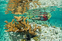 Snorkeler Jen Gibbud.<br /> Caneel Bay Beach<br /> Virgin Islands National Park.St. John, U.S. Virgin Islands