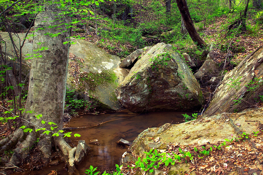 Stream, Tishomingo State Park, Mississippi