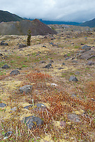 The Hummocks,  Mt. St. Helens National Volcanic Monument, Washington, US